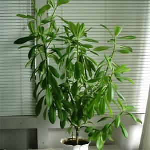 комнатные растения молочайные фото и названия